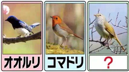 日本の三鳴鳥