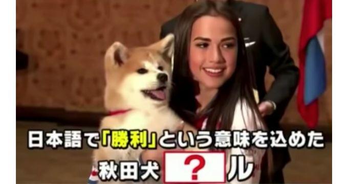 秋田犬マサル