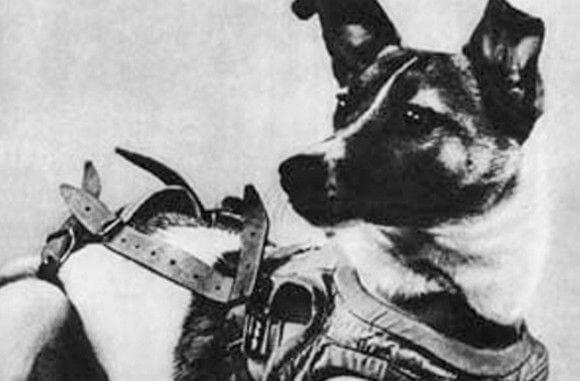 宇宙飛行に初めて行った犬「ライカ」