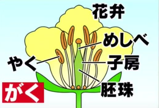 花のつくりの名前