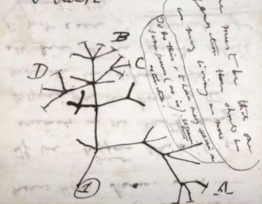 ダーウィンのスケッチ