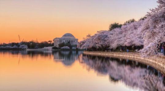 ワシントンD.C.の桜